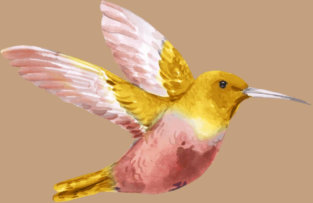 Aquarell Grafik eines rosa-gelben Kolibris, der nach rechts fliegt