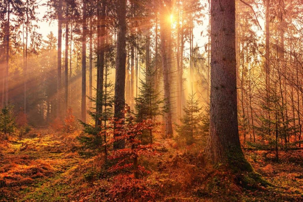 Meditationen gegen den Herbstblues