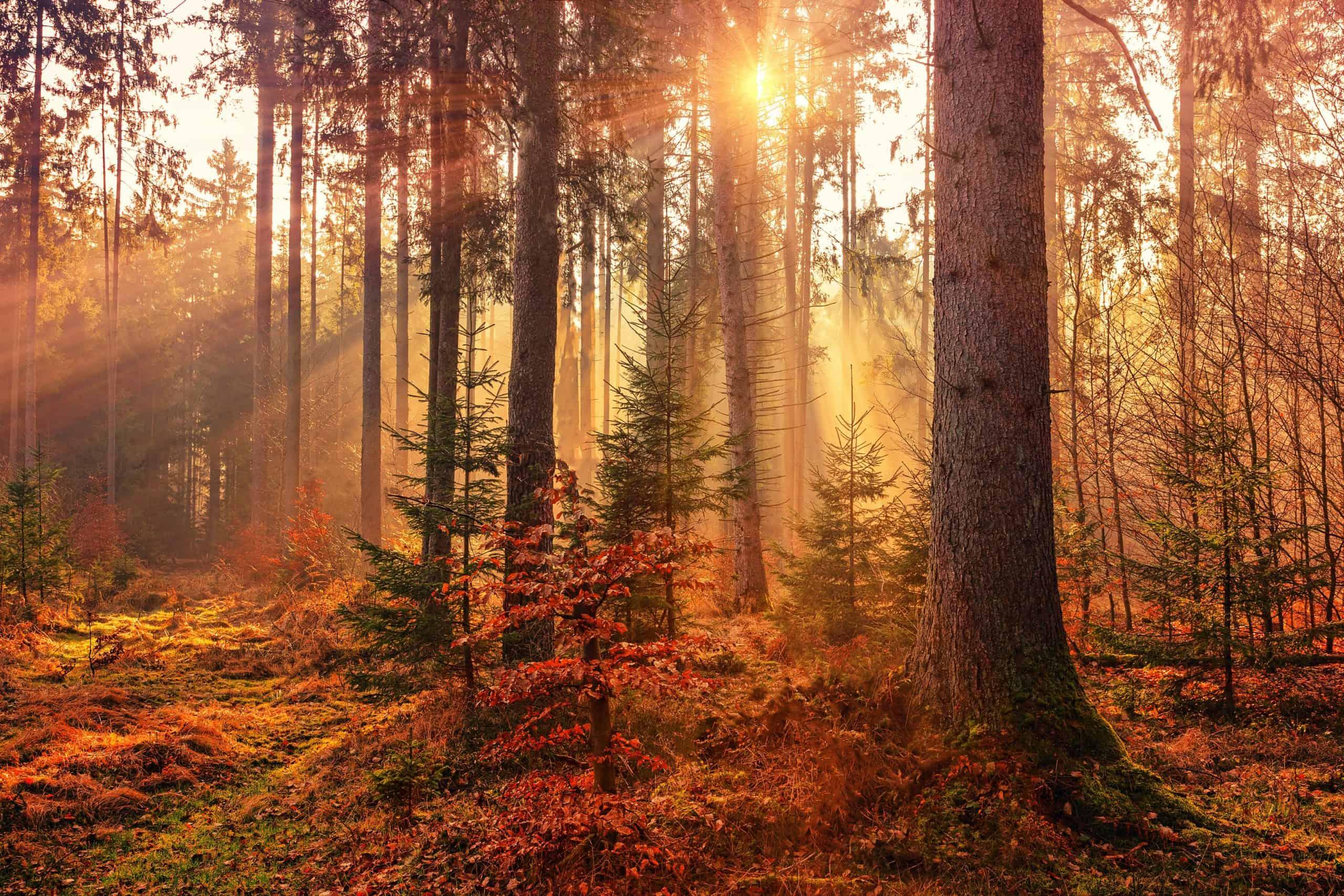 Ein bunter Herbstwald